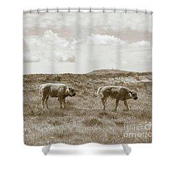 Shower Curtain featuring the photograph Three Buffalo Calves by Rebecca Margraf