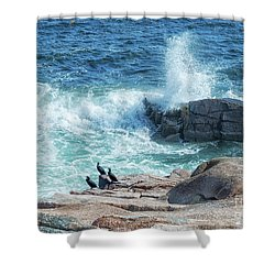 Three Cormorants At Monument Cove, Acadia National Park Shower Curtain
