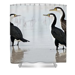Shower Curtain featuring the photograph Three Cormorants by Werner Padarin