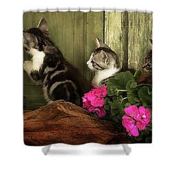 Three Cute Kittens Waiting At The Door Shower Curtain