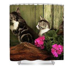 Three Cute Kittens Waiting At The Door Shower Curtain