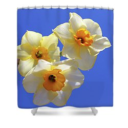 Shower Curtain featuring the photograph Three Daffodils by Judy Vincent
