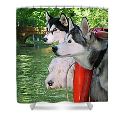 Three Dogs On A Boat Shower Curtain by Terri Waters