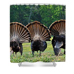 Three Fans Shower Curtain by Todd Hostetter