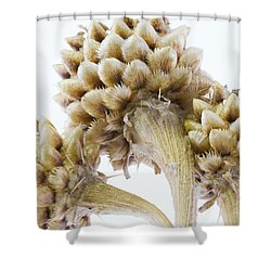 Three Globe Cornflower Seed Heads - Macro Shower Curtain by Sandra Foster
