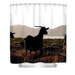 Shower Curtain featuring the photograph Three Goats by Pedro Cardona
