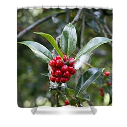 Three Happy Leaves Among Red Berries Shower Curtain by Helga Novelli