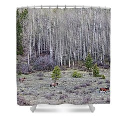 Three Horses Shower Curtain by James BO Insogna