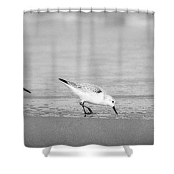 Shower Curtain featuring the photograph Three Hungry Little Guys by T Brian Jones