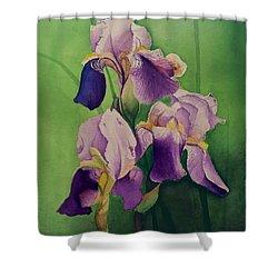 Three Iris Shower Curtain