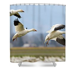 Three Landing Shower Curtain by Mike Dawson