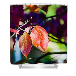 Three Leaves - 9583 Shower Curtain by G L Sarti