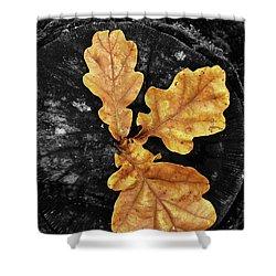 Three Leaves On Black Shower Curtain