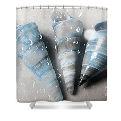 Three Little Trumpet Snail Shells Over Gray Shower Curtain
