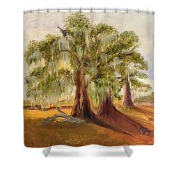 Three Live Oaks With Spanish Moss In A Florida Cow Pasture Shower Curtain