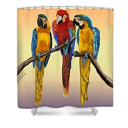 Three Macaws Hanging Out Shower Curtain