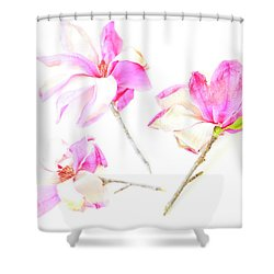 Three Magnolia Flowers Shower Curtain
