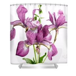 Three Mauve Japanese Irises Shower Curtain
