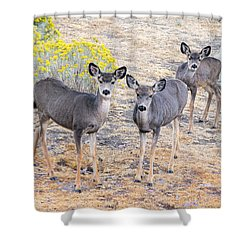 Shower Curtain featuring the photograph Three Mule Deer In High Desert by Frank Wilson