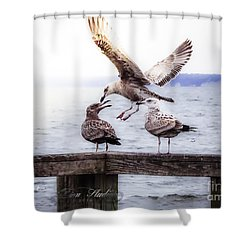 Three Of A Kind Shower Curtain by Melissa Messick