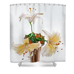 Three Pale Gold Lilies Still Life Shower Curtain