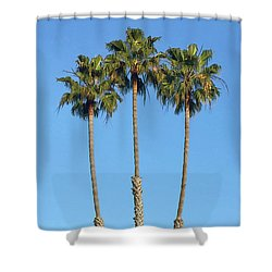 Shower Curtain featuring the photograph Three Palm Trees by Art Block Collections