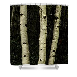 Shower Curtain featuring the photograph Three Pillars Of The Forest by James BO Insogna