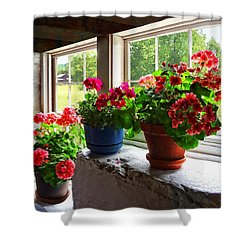 Three Pots Of Geraniums On Windowsill Shower Curtain