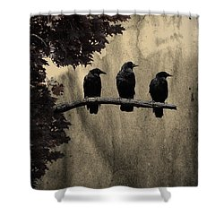 Three Ravens Branch Out Shower Curtain