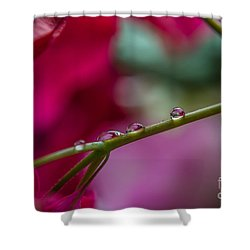 Three Reflecting Drops Shower Curtain