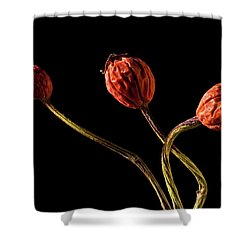 Three Rose Hips Shower Curtain