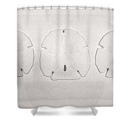 Three Sand Dollars Shower Curtain