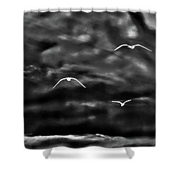 Three Seagulls Shower Curtain