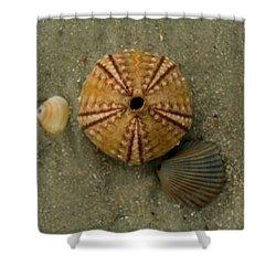 Three Shell Study Shower Curtain