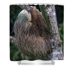 Shower Curtain featuring the photograph Three Toed Sloth by John Haldane