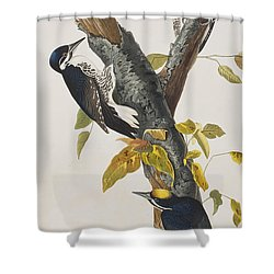 Three Toed Woodpecker Shower Curtain by John James Audubon