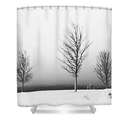 Three Trees In Winter Shower Curtain by Brooke T Ryan