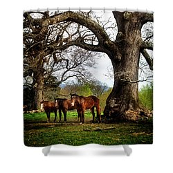 Three Under A Tree Shower Curtain