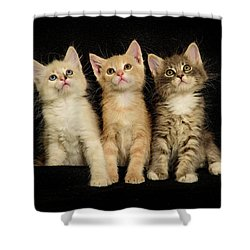 Three Wee Kittens Shower Curtain