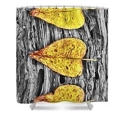 Three Yellow Leaves Shower Curtain