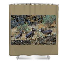 Three's Company Shower Curtain by Steve Warnstaff