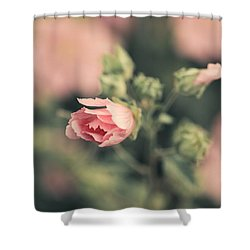 Thüringer Strauchpappel (lavatera Shower Curtain by Mandy Tabatt