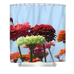 Thristy Hummer Shower Curtain by Jeanette Oberholtzer
