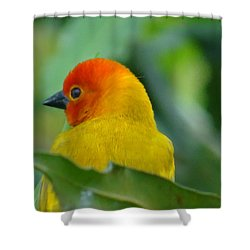Through A Child's Eyes - Close Up Yellow And Orange Bird 2 Shower Curtain