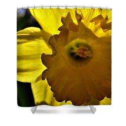 Through The Daffodil Shower Curtain