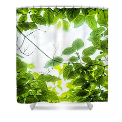 Shower Curtain featuring the photograph Through The Leaves by David Coblitz