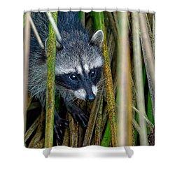 Through The Reeds - Raccoon Shower Curtain