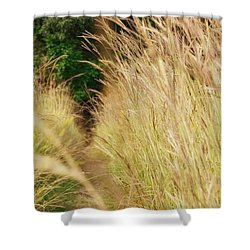 Shower Curtain featuring the photograph Through The Tall Grass by Nikki McInnes