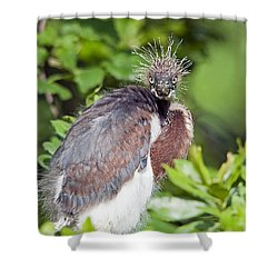 Ticked Off Shower Curtain