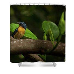 Tickell's Blue Flycatcher Shower Curtain by Venura Herath